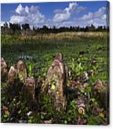 Garden In The Glades Canvas Print