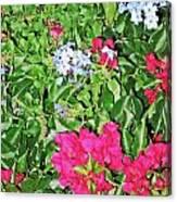 Garden Of Austria Canvas Print