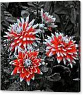 Garden Pom Poms Canvas Print