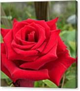 Garden Red Rose Canvas Print