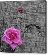 Garden Rose Canvas Print