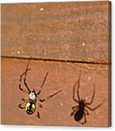 Garden Spider Canvas Print
