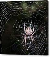 Garden Spider Canvas Print