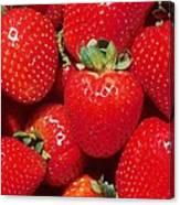 Garden Strawberries Canvas Print
