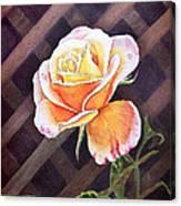 Garden Tea Rose Canvas Print