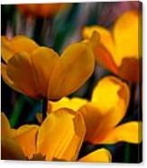 Garden Tulips Canvas Print