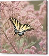 Garden Visitor - Tiger Swallowtail Canvas Print