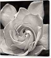 Gardenia Bloom In Sepia Canvas Print