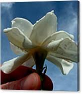 Gardenia For You My Dear Canvas Print