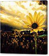 Garden's Golden Gift  Canvas Print