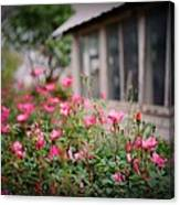 Gardens Of Pink Canvas Print