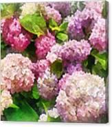 Gardens - Pink And Lavender Hydrangea Canvas Print