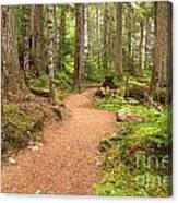 Garibaldi Path To Cheakamus Lake Canvas Print