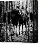 Gathering Of Moose Canvas Print
