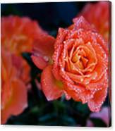 Gathering Of Roses Canvas Print