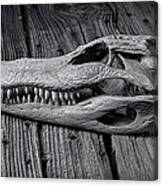 Gator Black And White Canvas Print