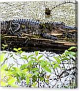 Gator Camoflage Canvas Print