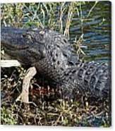 Gator On A Stick Canvas Print