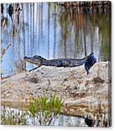 Gator On The Mound Canvas Print