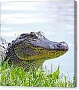 Gator Smile Canvas Print