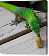 Gecko 2 Canvas Print