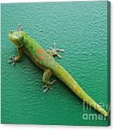Gecko Crossing Canvas Print