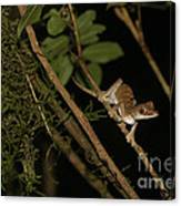 Gecko In The Night Canvas Print