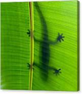 Gecko Silhouette Canvas Print