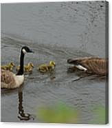 Geese And Goslings At The Flint River Canvas Print