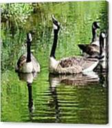 Geese And Green Canvas Print