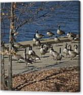 Geese At Port Landing Canvas Print