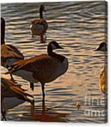 Geese At Sunset Canvas Print