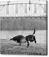 Geese By The Ohio Canvas Print