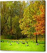Geese Galore Canvas Print