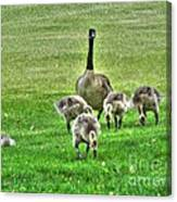 Geese Hdr Canvas Print