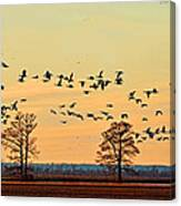 Geese In Flight I Canvas Print