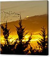 Geese In Golden Sunset Canvas Print