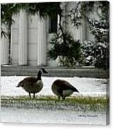 Geese In Snow Canvas Print