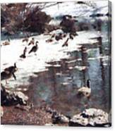 Geese On An Icy Pond Canvas Print
