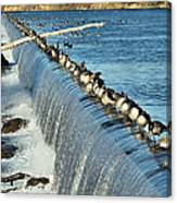 Geese On The Snake Canvas Print