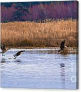 Geese Up And Away Canvas Print