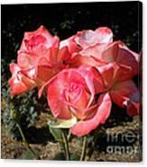 Gemini Tea Rose Canvas Print
