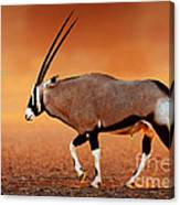 Gemsbok On Desert Plains At Sunset Canvas Print