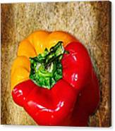Genetically Modified Capsicum Canvas Print