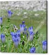 Gentian Wildflowers Canvas Print