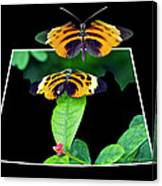 Gentle Butterfly Courtship 01 Out Of Bounds Canvas Print