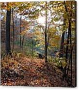 Gentle Forest Canvas Print