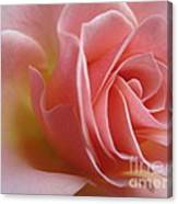 Gentle Pink Rose Canvas Print