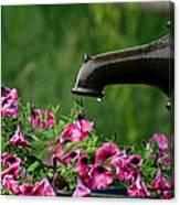 Gentle Rain - Old Water Pump - Pink Petunias - Casper Wyoming Canvas Print