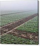Geometry In Agriculture Canvas Print
